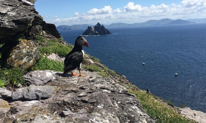 Skellig Island Tour